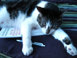 crossword cat